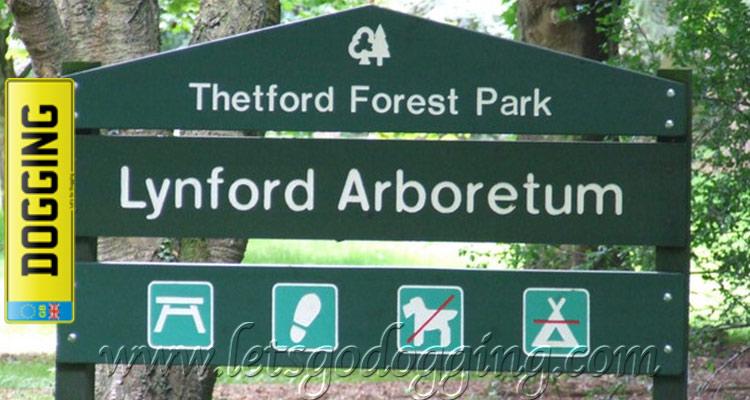 Thetford dogging site